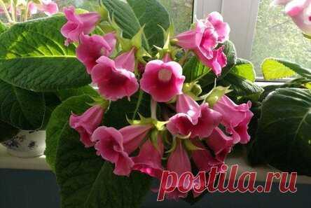 Цветущие комнатные растения: названия, фото и описания (каталог)