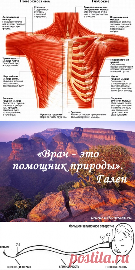 Остеопрактика - массаж, остеопатия, биодинамика