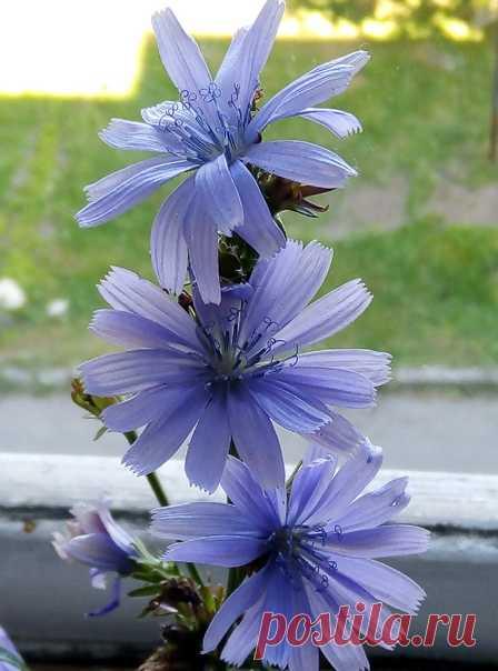 Вопрос ♥ Ответ Кто знает, что за цветок? Спасибо! 😊