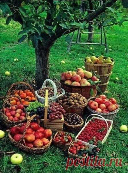 #7семян_полезное  Чем удобрять сад осенью?   Чтобы деревья и кустарники хорошо перезимовали, осенью их надо хорошенько накормить. А поскольку требования у всех растений разные, для каждого придется составлять отдельное меню.  Яблони и груши Их нужно подкормить сразу после уборки урожая: 1,5 стакана суперфосфата и 1 стакан сульфата калия.  Вишня и черешня Эти деревца полезно удобрить в сентябре: 1 стакан суперфосфата и 3 ст. ложки сульфата калия.  Смородина Этот к...
