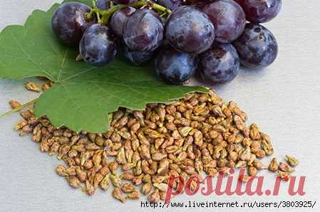 Youth elixir from grape seeds: old age \