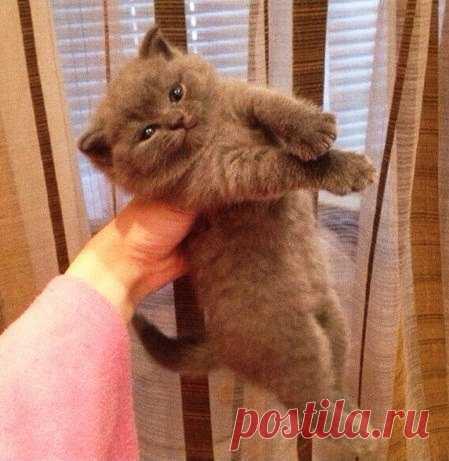 Простой рецепт счастья: Берем кота. Тискаем кота. Гладим кота. Радуемся :3
