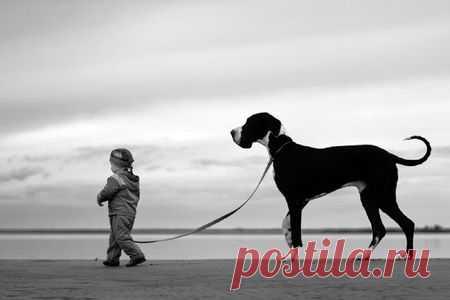 Человек собаке друг)