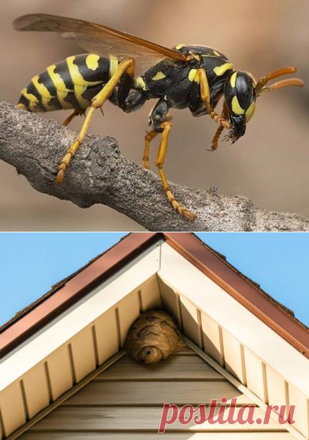 Как избавиться от ос на даче: под крышей, в недоступном месте