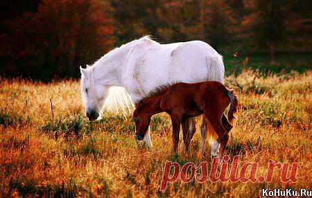Кобылка и жеребёночек) » Фото лошадей » Сайт о лошадях KoHuKu.ru