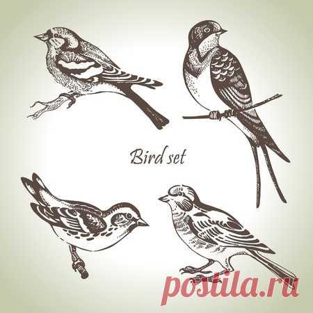 Dibujado A Mano Conjunto De Aves De Bosque Aislados En Blanco. Monocromo Esbozo De Pájaros Cantores Que Se Sientan. Ilustraciones Vectoriales, Clip Art Vectorizado Libre De Derechos. Image 60230762.