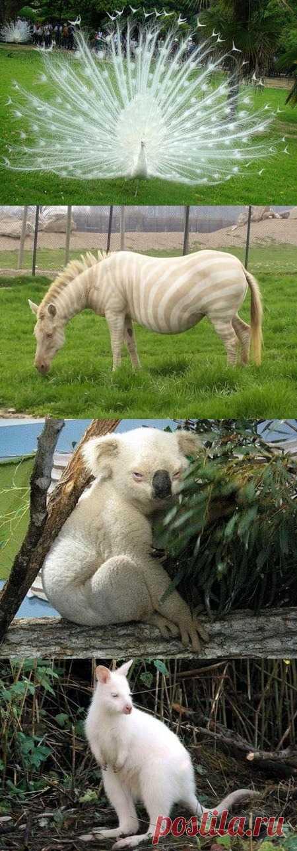 Удивительное рядом – животные-альбиносы. По ссылке еще много других видов