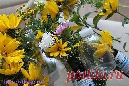 Как консервировать цветы в глицерине - Волшебство своими руками