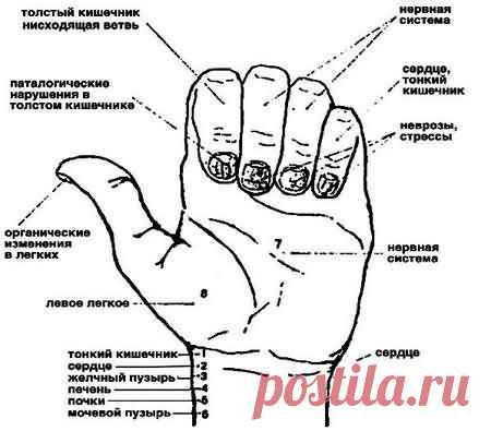 Диагностика по ногтям | Центр тибетской медицины КУНПЕН ДЕЛЕК