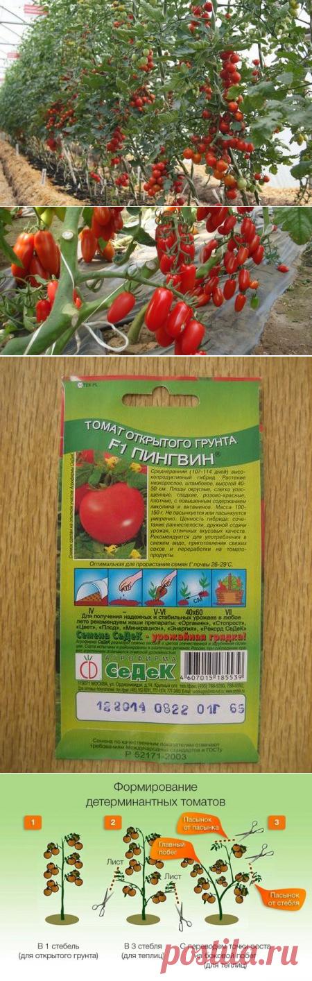 Determinantnye e indeterminantnye las clases el tomate: en que la diferencia que este tal