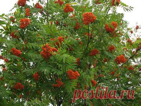 лесные ягоды названия и фото для детей