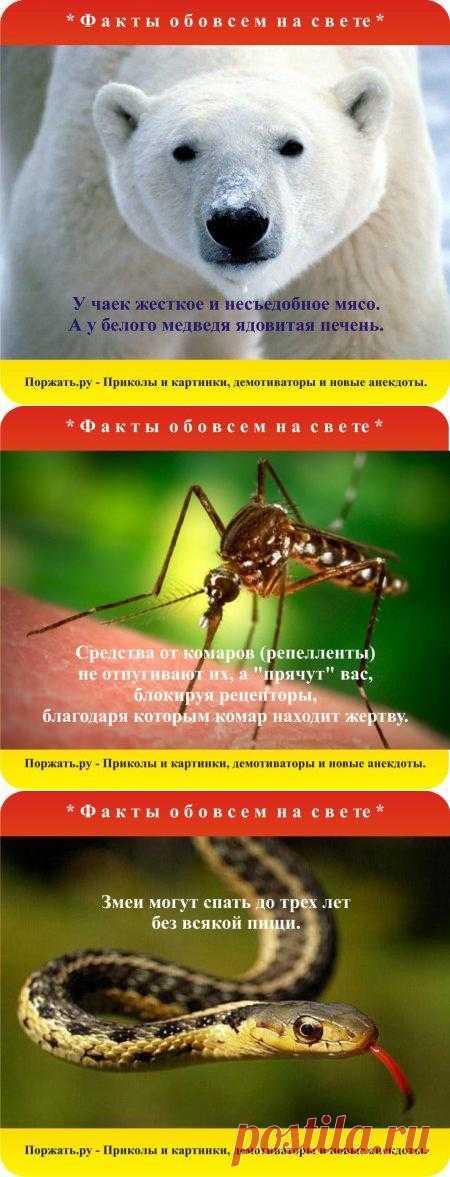 """Знаете ли вы, что средства от комаров (репелленты) не отпугивают их, а """"прячут"""" вас, блокируя рецепторы, благодаря которым комар находит жертву.  Еще много интересных факты в картинках обо всем."""