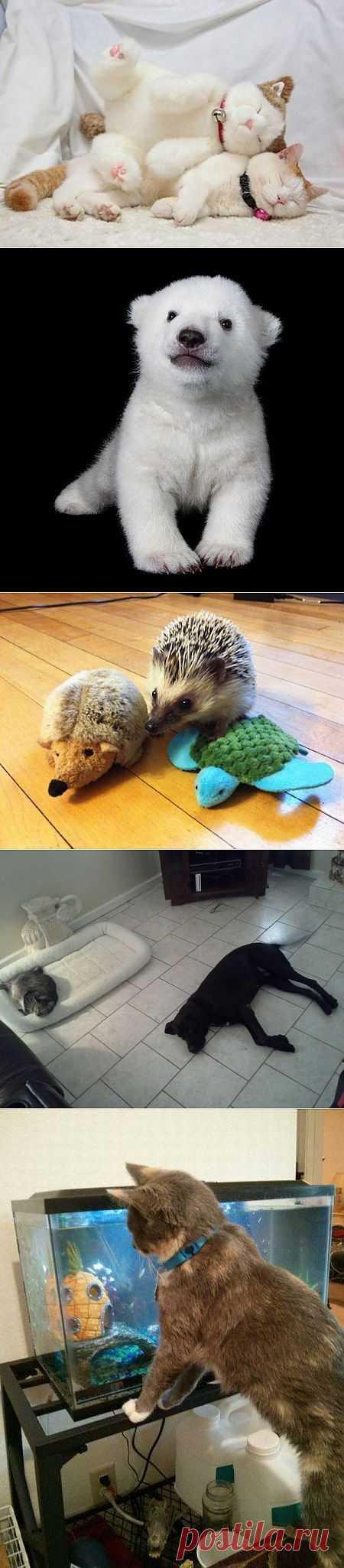 Забавные зверушки   Всё самое лучшее из интернета