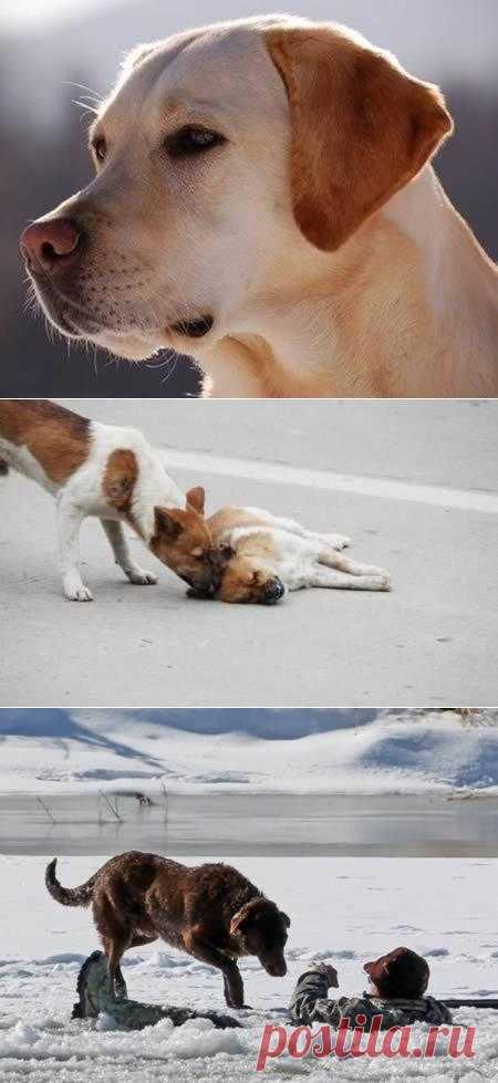 Самые трогательные истории о собачьей преданности