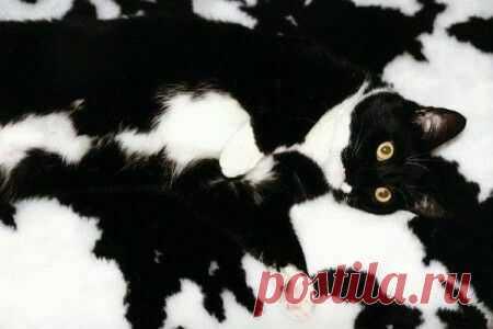 Найди кота )