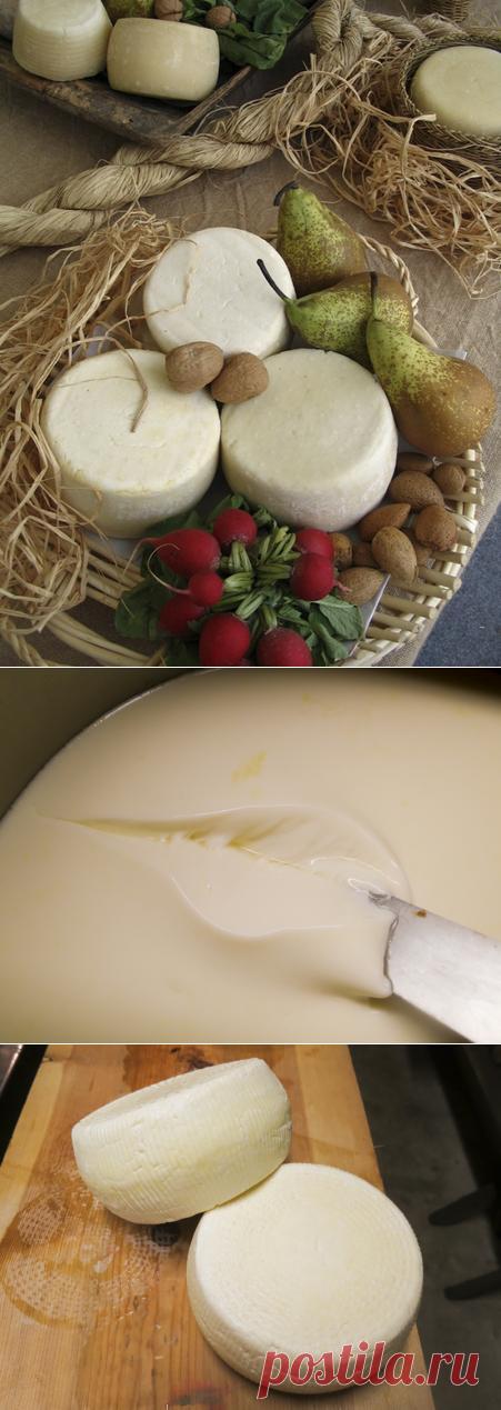 Рецепт Caciotta  Качотта - это сливочный полумягкий сыр из центральной Италии, сделанный из овечьего, коровьего, козьего, буйволиного молока или любой комбинации. Это сыр для начинающих, но у него есть необычный этап в процессе приготовления, который называется stufatura, что в переводе с итальянского означает «приготовление на пару».  Во время путешествия по Италии это одна из самых распространенных форм сыра, которую можно найти на итальянском столе. Этот сыр можно есть ...