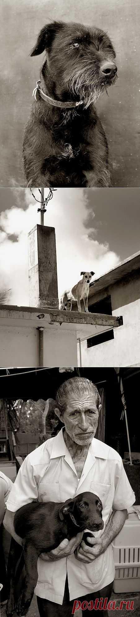 Траер Скотт (Traer Scott) с фотографиями бездомных собак из Мексики.