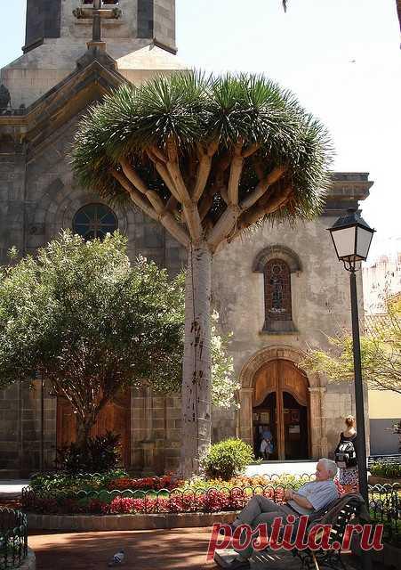 На Тенерифе красиво и уютно. Пуэрто-де-ла-Крус, Испания