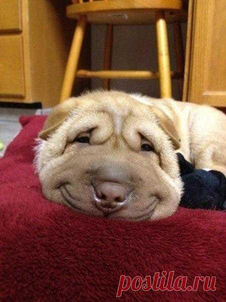 Самый добрый пес :)
