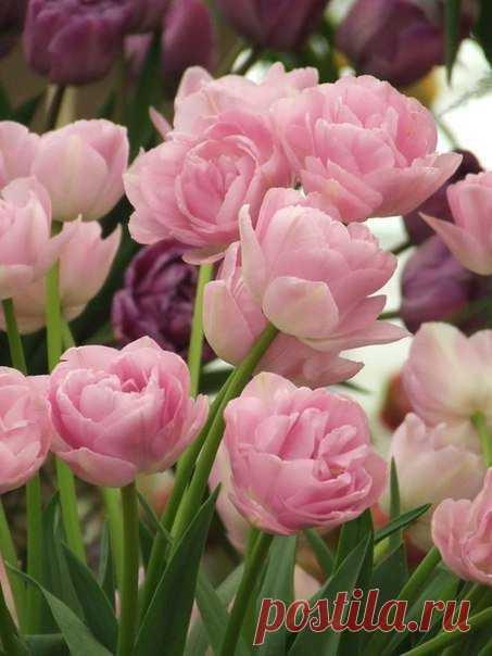 Quiero ✿ las FLORES ✿   I ♥ Flowers