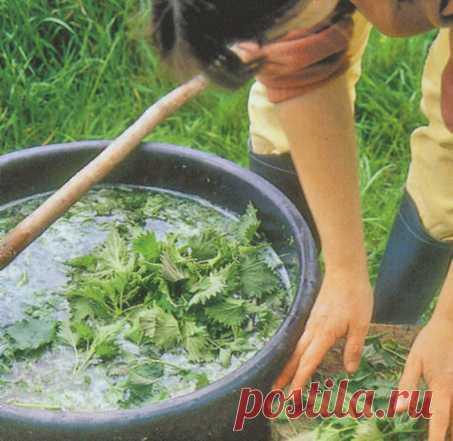 Daremos de comer hortalizas... Por la hierba