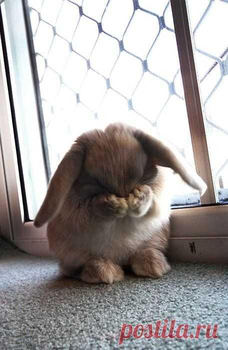 Ну, очень стеснительный кролик )
