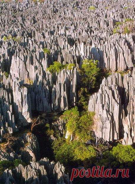 Мадагаскарский каменный лес! На обширной территории заповедника Цинги-де-Бемараха занимая площадь в 1520 кв. км расположилось множество остроконечных пиков и скал. Уникальное место! Остров Мадагаскар