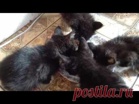 #Спасение бездомных котят #4 Комочка счастья