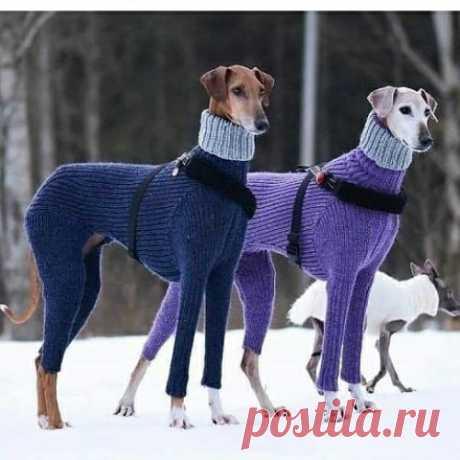 Воскресные хвастики. Одежда для животных.  КОГДА ХОЗЯЙКА РУКОДЕЛЬНИЦА  А ваши питомцы носят вязаную одежду?  Хотелось бы посмотреть фото ваши красавчиков  и