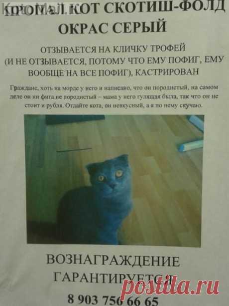 кошки | KotoMail.ru