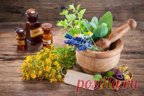3 факта о растительных препаратах. Об этом многие не знают.
