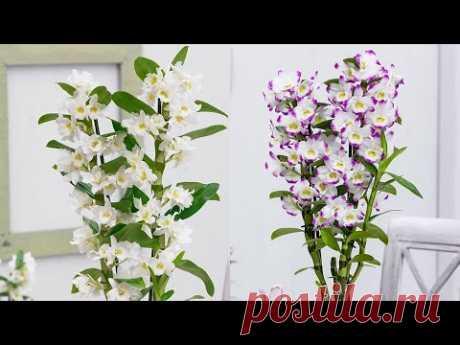 ОРХИДЕЯ ДЕНДРОБИУМ : ПРАВИЛА ВЫРАЩИВАНИЯ #ОРХИДЕИ_ДЕНДРОБИУМ  #dendrobium_orchids #oldenburgru#145