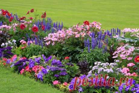 20+ цветов, которые можно посеять под зиму. Название, описание, фото — Ботаничка.ru