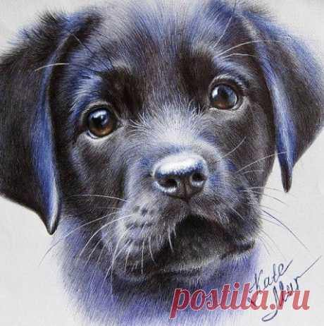 Посмотрите в глаза животным - Вы увидите в них себя!  Художник Kate Mur  Посмотрите в глаза животным -Вы увидите в них себя.Свой портрет как на белой бумаге -На оттенках листов бытия. Этих глаз, нет , поверьте честнее,В них щемящее чувство добра,Та люб…
