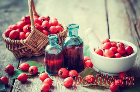 Ягоды боярышника: польза и вред, как принимать чай, компот, отвар