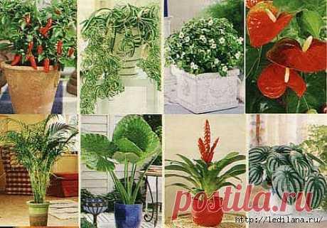 Комнатные растения. Правила полива .