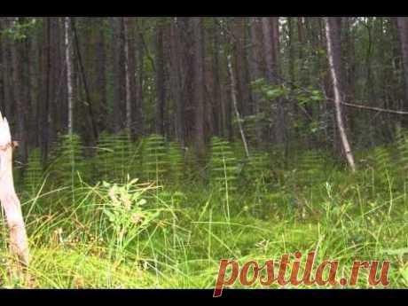 ВИДЕО:Магический лес. Программа исполнения желаний.