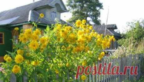 Многолетние цветы - сорта, посадка, выращивание, уход и размножение
