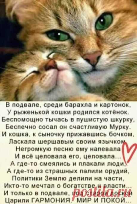 Лента по интересам - 1236214 - Tabor.ru