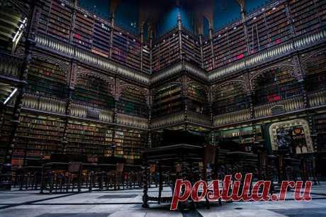 Самые впечатляющие библиотеки в мире, которые стоит посетить