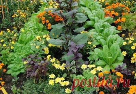 6 environmentally friendly ways to increase fertility of the soil