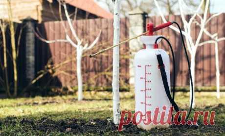 Сад весной: три обязательные весенние обработки против болезней и вредителей | В саду (Огород.ru)