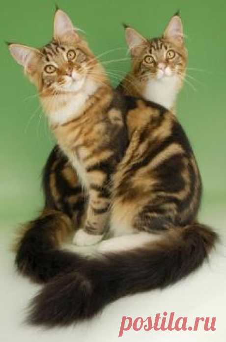 Кошка — священное животное. Великое предназначение вашего пушистого любимца   Милая Я Мы так привыкли к нашему пушистому домашнему питомцу, который всегда подойдет и утешит нас, если стало грустно, который будет громко мурлыкать, свернувшись клубочком на наших коленях и уткнувшись мокрым холодным носиком в нашу руку. Безусловно, кошка – это самый нежный и в то же время свободолюбивый и непокорный домашний питомец. Вот, например, своего кота не просто посадить в сумочку и п...