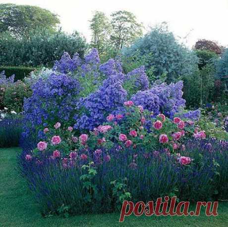 Сочетания роз c другими растениями и кустарниками - Страница 216 - Форум Садоводов