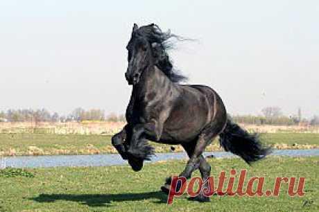 Обои Животные Лошади, обои для рабочего стола, фотографии животные, лошади, вороной, красавец Обои для рабочего стола, скачать обои картинки заставки на рабочий стол.