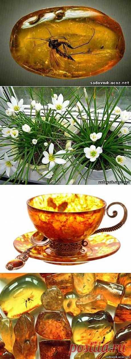 Стимулятор роста комнатных цветов.Янтарная кислота .
