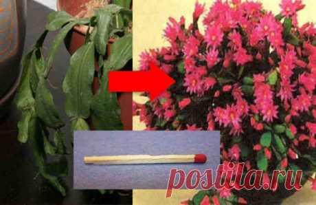"""Как оживить увядающее комнатное растение - Женский Журнал Комнатные растения — это не только украшение интерьера, но и помощники в создании приятной атмосферы в доме. И как хорошо, когда они нас радуют своей зеленью и цветами! Но случается так, что вдруг ваши растения начинают """"скучать"""", выглядят не слишком здоровыми и полными сил, а иногда даже начинают увядать или желтеть. А ведь вроде бы …"""