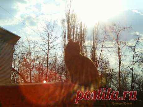 Весенняя меланхолия | Кошки & Коты | Яндекс Дзен Снова пришла весна. Радуются ей и люди, и кошки. Но и весной иногда кому-то вдруг становится грустно. И людям, и кошкам. И даже котам. Почему так случается? Кто ж его знает. Просто какая-то весенняя меланхолия...  теги: кошки, весенняя меланхолия, меланхолия, кошки и коты, грустный кот, весна, весенний кот, любовь и весна, одинокий кот, стихотворение, стихи о котах