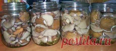 Соление грибов   Советы грибника