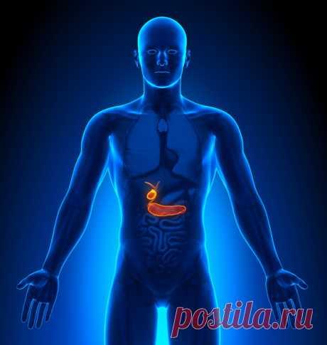 Биологические часы против диабета - Картина Дня - медиаплатформа МирТесен Правильно настроив испорченные биологические часы в клетках поджелудочной железы, можно снизить риск диабета. Как и многое другое в нашем теле, обмен веществ подчиняется биологическим ритмам. Это значит, например, что какие-нибудь клетки, которые синтезируют гормоны для метаболизма, синтезируют их...